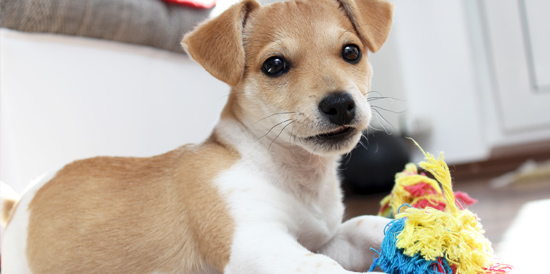 Petland Pensacola Florida Pet Store - Premium Pets, Puppies & Supplies
