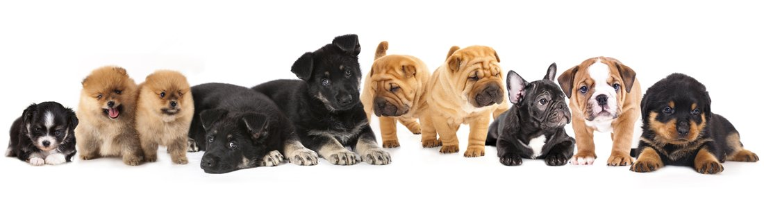 Dogs & Puppies for Sale - Visit Petland Pensacola, Florida!