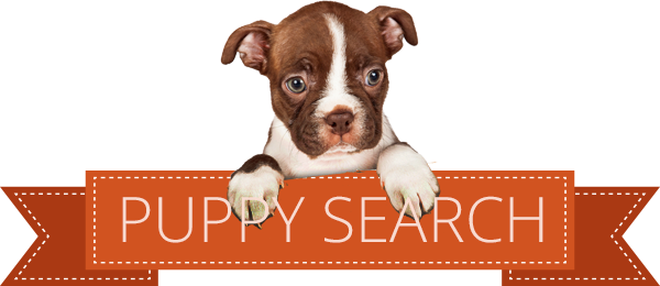 puppy search